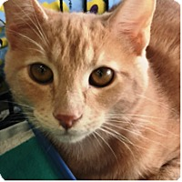 Adopt A Pet :: Sunny - Orange, CA