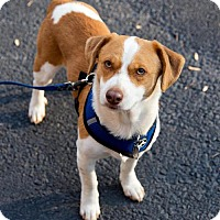 Adopt A Pet :: Dusty - Arlington, VA