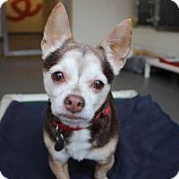 Adopt A Pet :: Rufus - Atlanta, GA