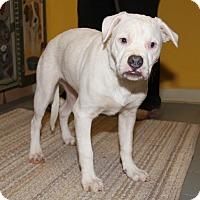 Adopt A Pet :: Blue - Orland Park, IL
