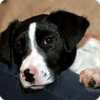 Adopt A Pet :: Roxy & Fiona - Chattanooga, TN