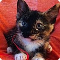 Adopt A Pet :: Sasha - Reston, VA