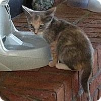 Adopt A Pet :: Macie - Monroe, GA