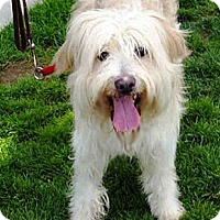 Adopt A Pet :: Yahzee URGENT - Sacramento, CA