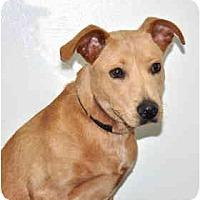 Adopt A Pet :: Riley - Port Washington, NY