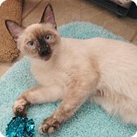 Adopt A Pet :: Eleyna - North Highlands, CA
