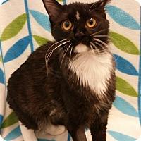 Adopt A Pet :: Honda - Higley, AZ