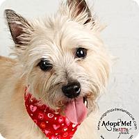 Adopt A Pet :: Izzy - Omaha, NE