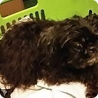 Adopt A Pet :: Diva - Floresville, TX