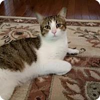 Adopt A Pet :: Stuart - West Orange, NJ
