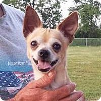 Adopt A Pet :: Cheech - Huntingburg, IN