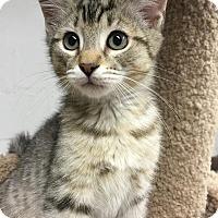 Adopt A Pet :: Dorado - Turnersville, NJ