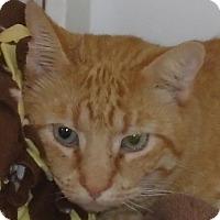 Adopt A Pet :: Muggle Earl - Georgetown, TX