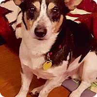 Adopt A Pet :: Charlie (NC) - Raleigh, NC