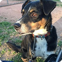 Adopt A Pet :: Rodney - Littleton, CO