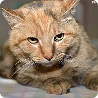 Adopt A Pet :: Buffy - Medina, OH