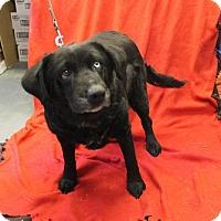 Adopt A Pet :: Storm - Delaware, OH