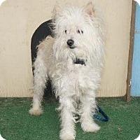 Adopt A Pet :: Louis - Los Angeles, CA