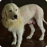 Adopt A Pet :: Blanca - San Antonio, TX
