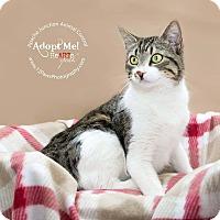 Adopt A Pet :: New - Apache Junction, AZ