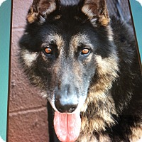 Adopt A Pet :: NERO VON NURNBERG - Los Angeles, CA