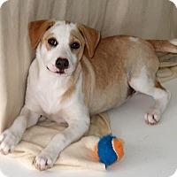 Adopt A Pet :: Tessie - Burbank, OH
