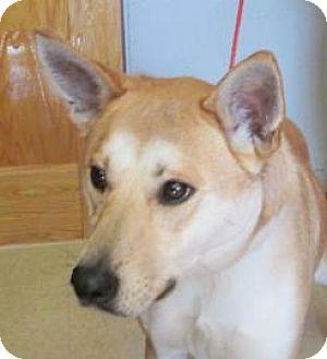Siberian Husky/Mountain Cur Mix Dog for adoption in Ashtabula, Ohio - Chloe