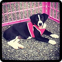 Adopt A Pet :: Abby - Grand Bay, AL