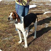 Adopt A Pet :: HANK - Coeburn, VA