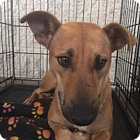 Adopt A Pet :: Itsy - Gainesville, FL