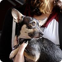 Adopt A Pet :: Elli - Los Angeles, CA