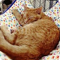 Adopt A Pet :: Anna - Fallbrook, CA