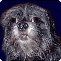 Adopt A Pet :: Toby - New York, NY