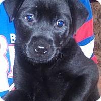 Adopt A Pet :: Claudia - Phoenix, AZ
