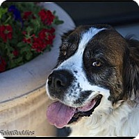 Adopt A Pet :: LADY - Glendale, AZ