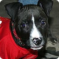Adopt A Pet :: Alton - Cleveland, OH
