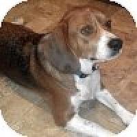 Adopt A Pet :: Madelynne - Novi, MI