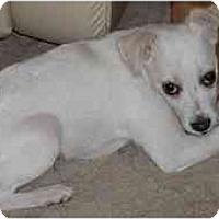 Adopt A Pet :: Patrick - Scottsdale, AZ