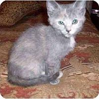 Adopt A Pet :: Priscilla--adopted! - New Richmond, OH