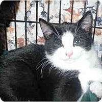 Adopt A Pet :: Xerox - Colmar, PA