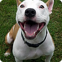 Adopt A Pet :: Sophie - Baton Rouge, LA