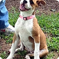 Adopt A Pet :: CANDICE - Leland, MS