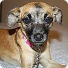 Adopt A Pet :: Betina