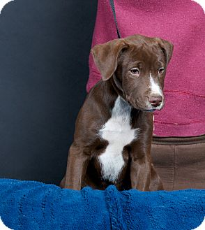 Nuevo, CA - Labrador Retriever/Fox Terrier (Smooth) Mix ...