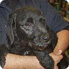 Adopt A Pet :: Rochester