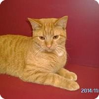 Adopt A Pet :: Oscar - Muscatine, IA