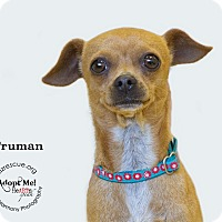 Adopt A Pet :: Truman - Phoenix, AZ