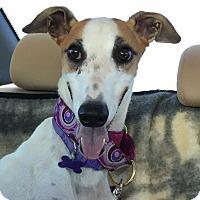Adopt A Pet :: Peanut - Tucson, AZ