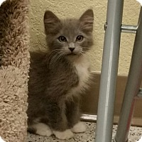 Adopt A Pet :: Soul Haven - Phoenix, AZ