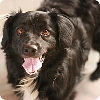 Adopt A Pet :: Penny - Canoga Park, CA